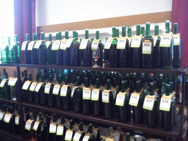 První leteošní Košt vína
