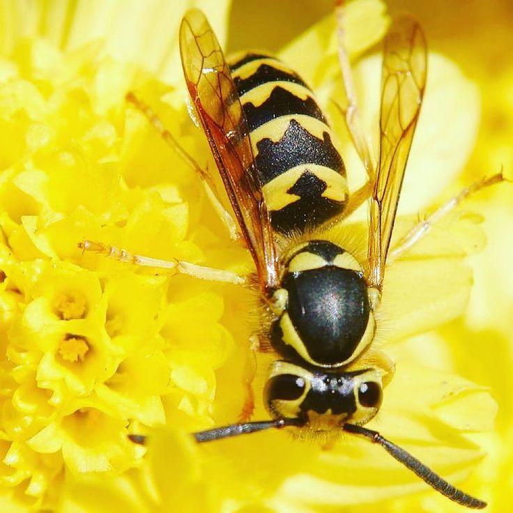 Hornets Nest Pest Control #syracuseny #bees #exterminator #pestcontrol #wasp