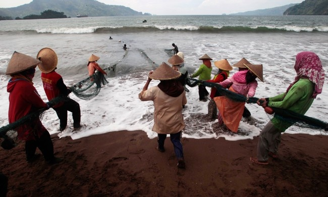 Heave-ho  Indonesian fishermen tow nets on theTrenggalek coast in East Java province.  PHOTO: REUTERS/Sigit Pamungkas