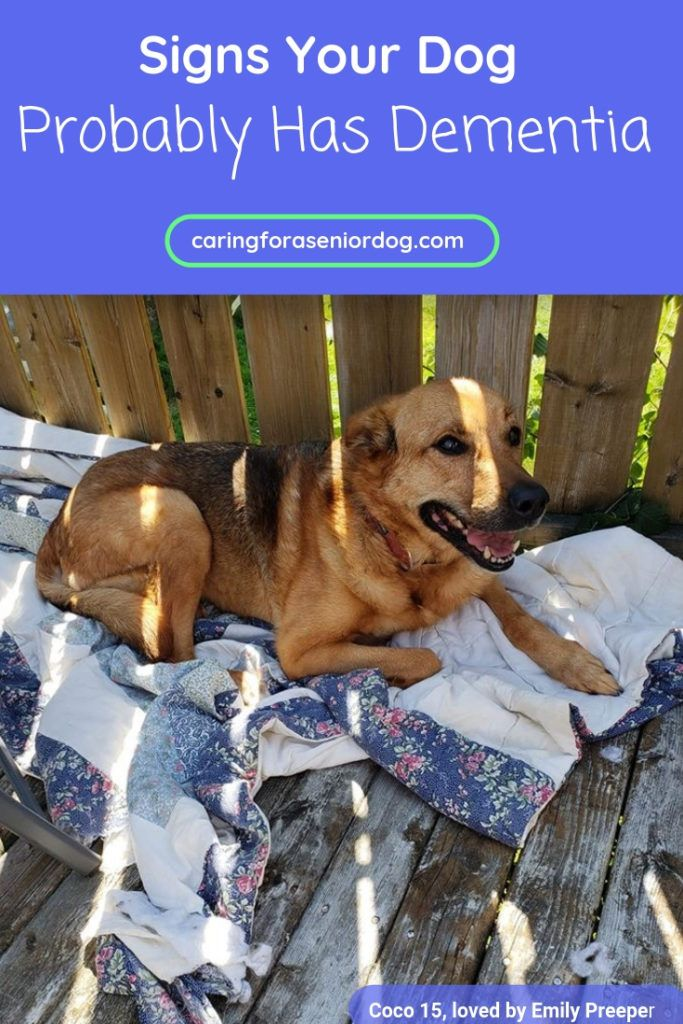 Signs Your Dog Probably Has Dementia Dog Health Tips Dog Care