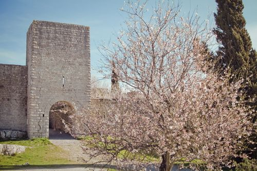 Saint Julien le Montagnier en Provence. Par Muddy photography : http://www.flickr.com/photos/escucha/