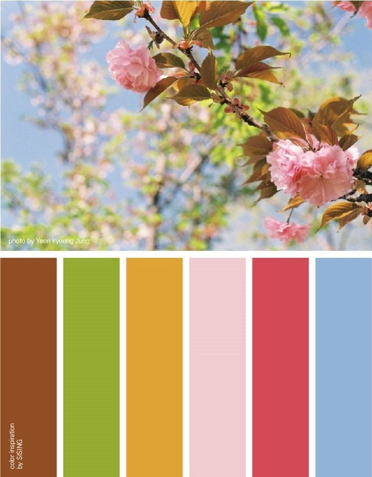 [color inspiration by SISING] cherry blossom, spring, feminine, adorable, warm, soft, flower