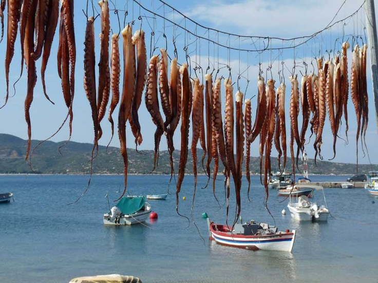 Calamari by Pigadaki beach, Sithonia, Halkidiki.