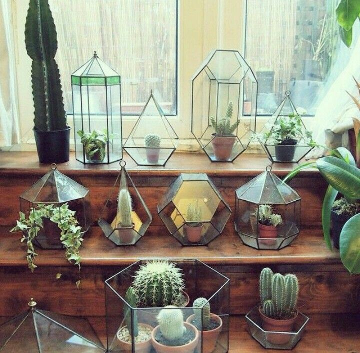 geometrikus üveg terráriumok -  Geometric glass terrariums