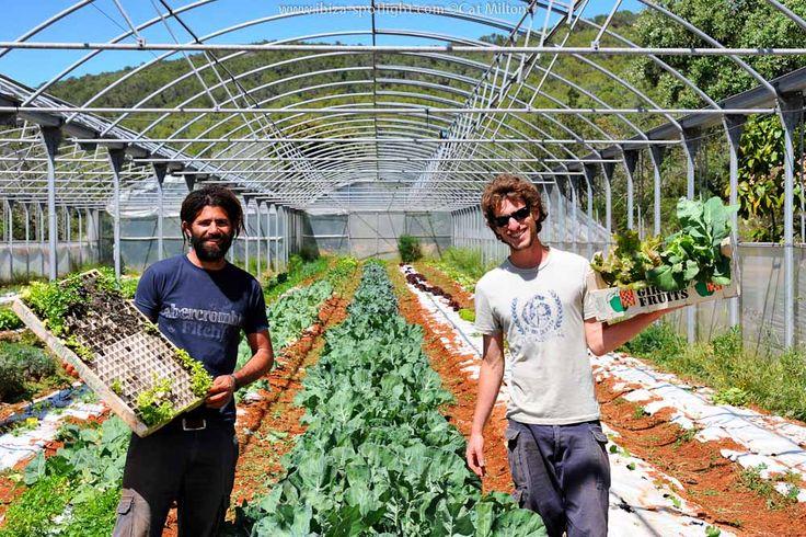 Ibiza Spotlight Ibizeneco Organic Vegetable Delivery