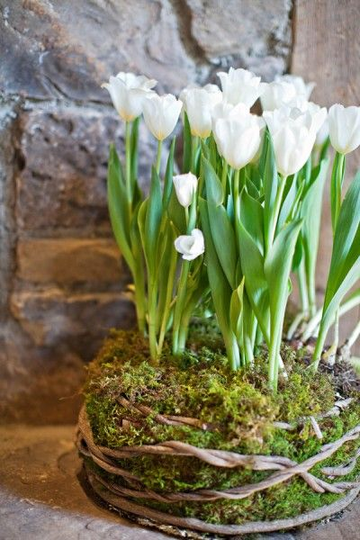 What a great idea...love the moss tucked in grapevine for spring bulbs