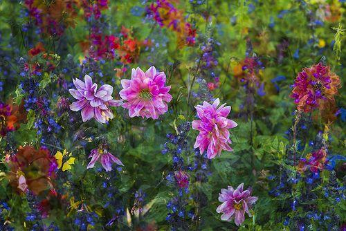 Flora Plenteous 35