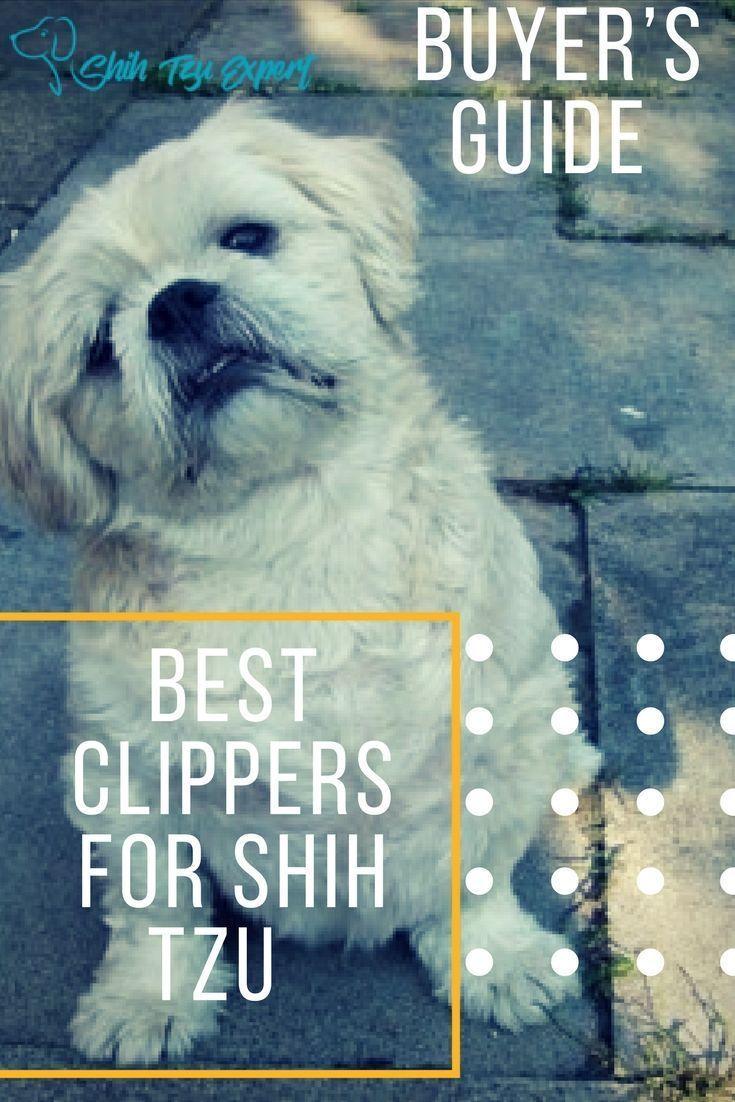 Best Clipper On A Budget Shihtzu Shih Tzu Puppy Training