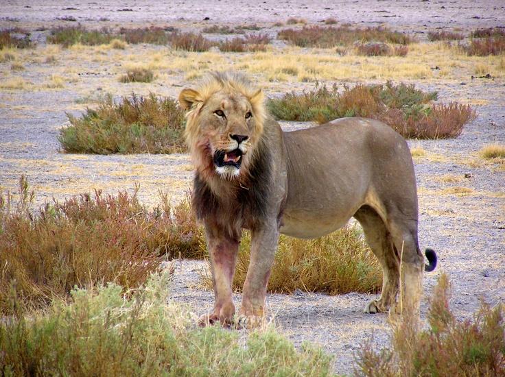 Destination Namibia: On Safari in Etosha