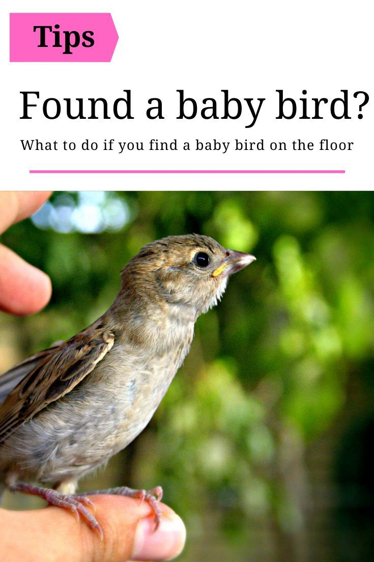 What To Do If You Find A Baby Bird In 2020 With Images Wild Birds Birds Attract Wild Birds