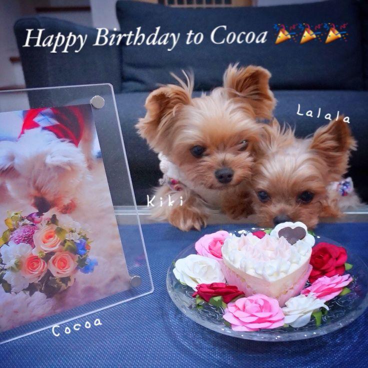 Happy Birthday to Cocoa !! Nov. 23, 2014