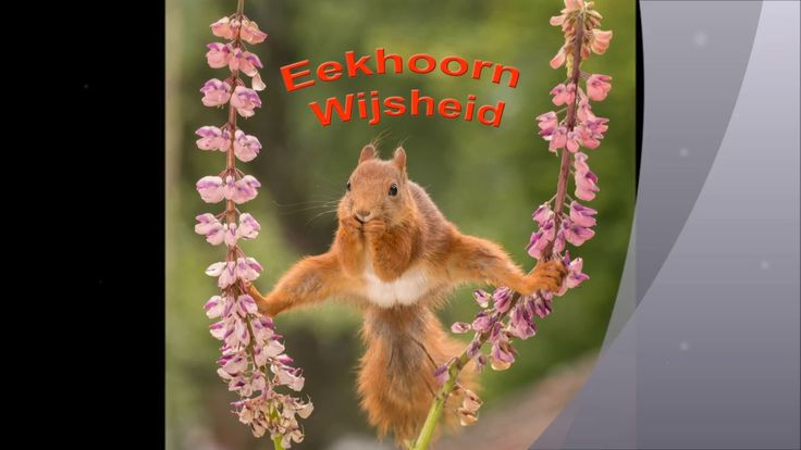 6 October new squirrel book launch in Dutch