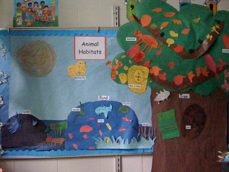 Classroom Board Decoration For Preschool : Science bulletin boards for kindergarten who