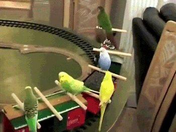 #Инженер - это, когда всё, что ты делаешь, для других. Остальное #лирика...  #жд #БЧ #РЖД #поезд #попугай #паровоз #аттракцион #инженернаястудия