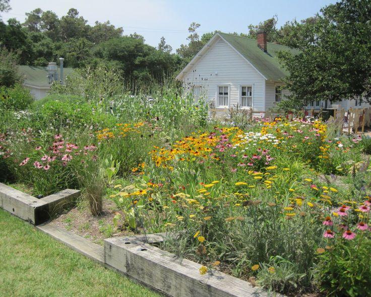 wildflower garden in currituck nc may dreams gardens - Garden Ideas North Carolina