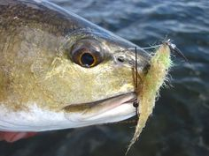 4 Flies that Changed Saltwater Fly Fishing | caseysmartt.com