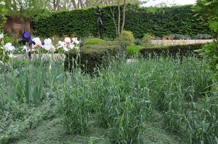 Bildresultat för gräs, gråtimjan