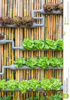 Jardinage Hydroponique De Verticale - Télécharger parmi plus de 37 Millions des photos, d'images, des vecteurs et . Inscrivez-vous GRATUITEMENT aujourd'hui. Image: 48610942