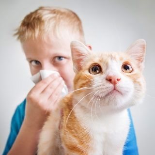 This post is about the causes of pet allergies and proper way to apply essential oils for pet allergies relief. Its might be from your dog or cat.