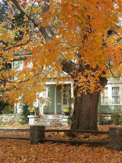 Sheer Wrap - Autumn Morning by VIDA VIDA LhOZ65