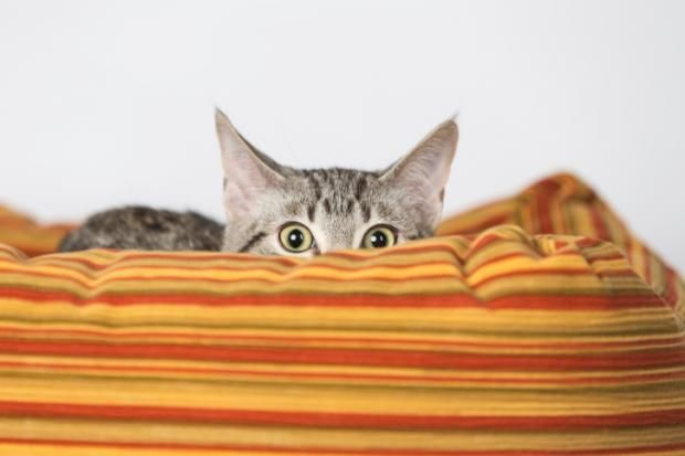 Cats aren't exactly open books. Here are a few facts that even ailurophiles (cat lovers) might find surprising.