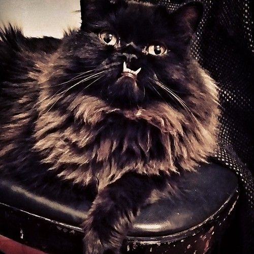 71 best images about fetching felines on pinterest cats