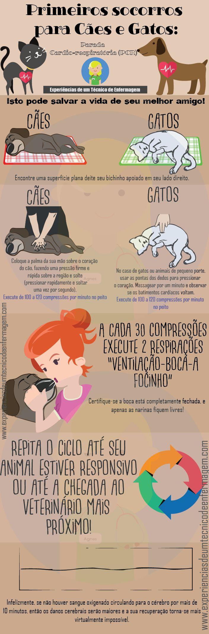Primeiros Socorros para Cães e Gatos: A Parada Cardio-respiratória, o que fazer?