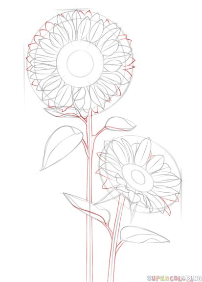 how to draw a sunflower step by step for kids