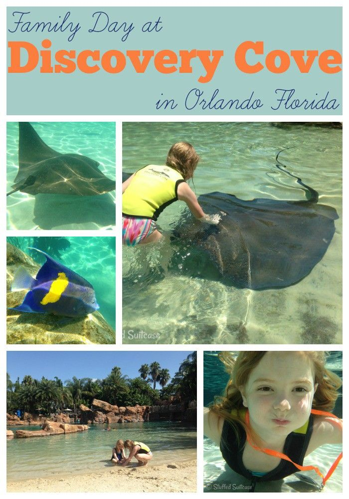 While most people picture busy theme parks when they think about Orlando, we discovered a real gem that doesn't fit that picture at all. Discovery Cove is located right by SeaWorld and just a short drive from the Disney parks. It's an all-inclusive day resort where your family can relax and unwind alongside some unique …