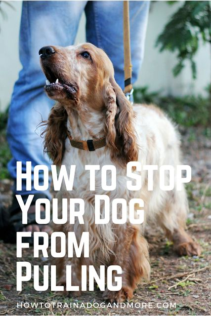 How to stop your dog from pulling? Are you walking your dog, or is your dog walking you? ....visit this blog for lots of dog training tips, including barking, biting, aggression, toilet training, jumping, pulling, separation anxiety and more!