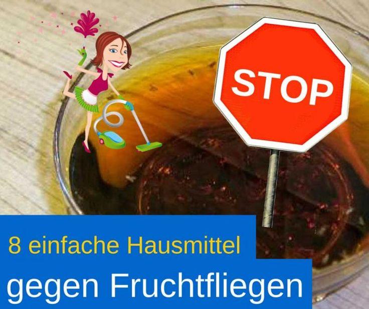 Přes 25 nejlepších nápadů na téma Fruchtfliegen Hausmittel na - hausmittel gegen ameisen in der küche