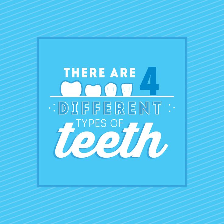 Dental Fact:  HUMANS USE 4 types of teeth (incisors, canine, premolars, and molars) to cut, tear and grind their food! Take good care of them!