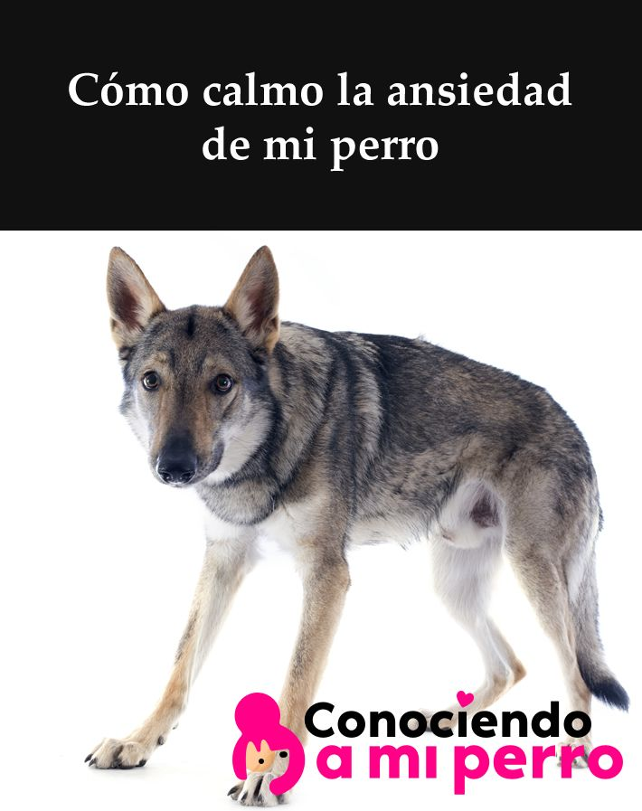 Pin En Conociendo A Mi Perro