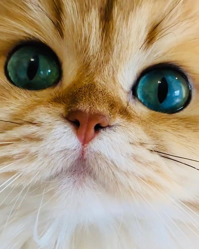 You Are My Sun My Moon And All My Stars Cats Funny Cat Videos