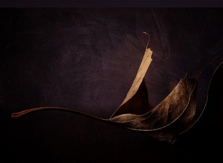 Kate Luber curves