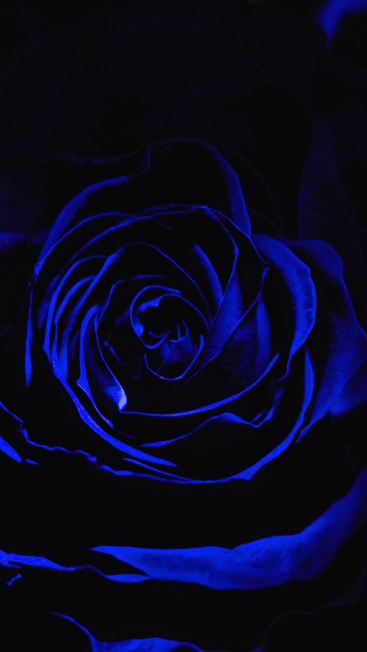 Blue Rose Dark Close Up 720x1280 Wallpaper Black Roses