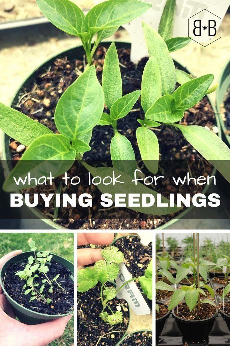 fd55c314bef6f25cfe5050575bf9ec9e - How To Start A Gardening Business Australia