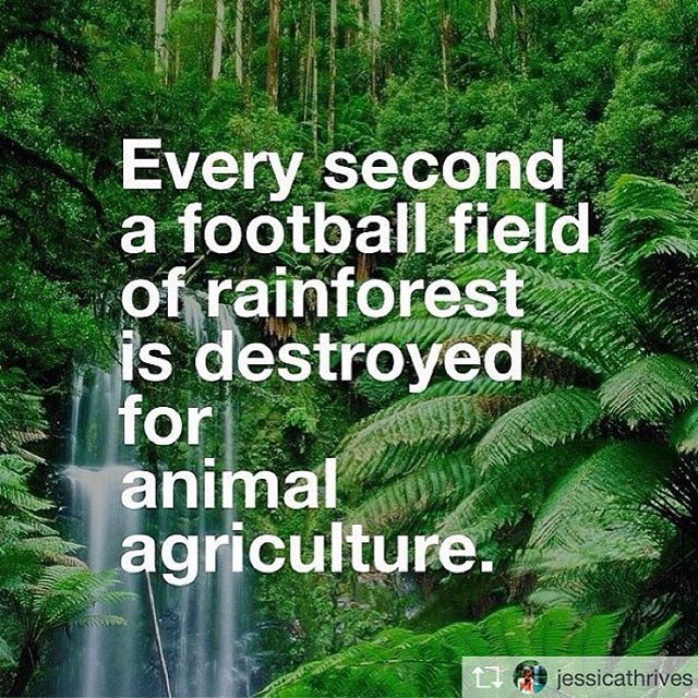 animal agriculture destroys rain forests and wildlife, go #vegan to help save the environment #eco