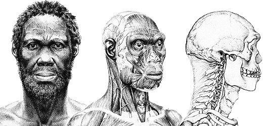 """41. Homo sapiens. Sus restos se descubrieron en Etiopía y su capacidad cranel era de 1450 cm3. Su nombre significa """"hombre capacitado para conocer y reflexionar respecto a lo que conoce anciano"""". Vivió durante el Pleistoceno Medio. Se considera una subespecie a la nuestra , que es la homo sapiens sapiens."""