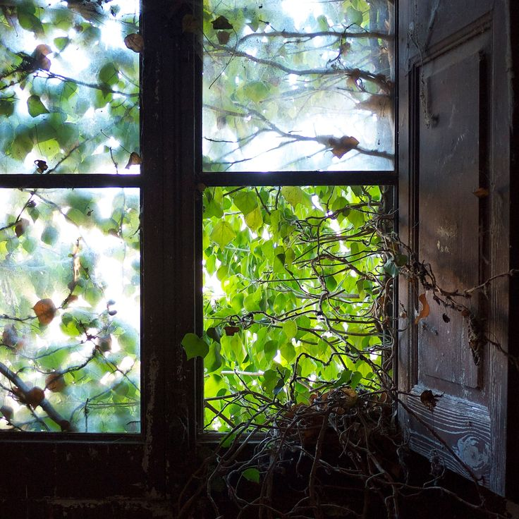 #abandoned #window