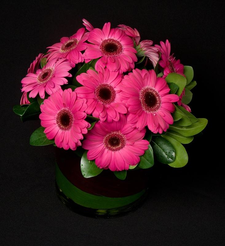 Gerbera Daisy Arrangements Vases: 32 Best Gerber Daisy Arrangements Images On Pinterest