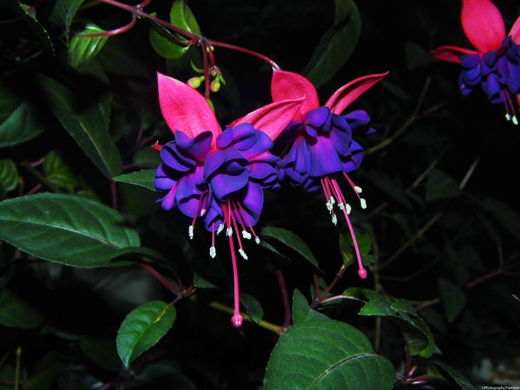 1000 Images About Flowers At Night On Pinterest