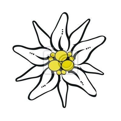 Coloriage Fleur Edelweiss.Edelweiss Fleur Montagne Idee D Image De Fleur