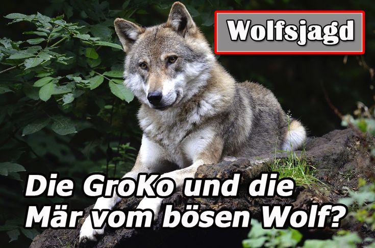 Bestürzt zeigte sich der Straubinger Ortsverband der Partei DIE LINKE über die von CDU/CSU und SPD in ihren Koalitionsverhandlungen geplante Bejagung von Wölfen. Ortsverbandssprecher Karl Ringlstetter wirft den Großkoalitionären Panikmache und das Schüren von diffusen Ängsten vor.