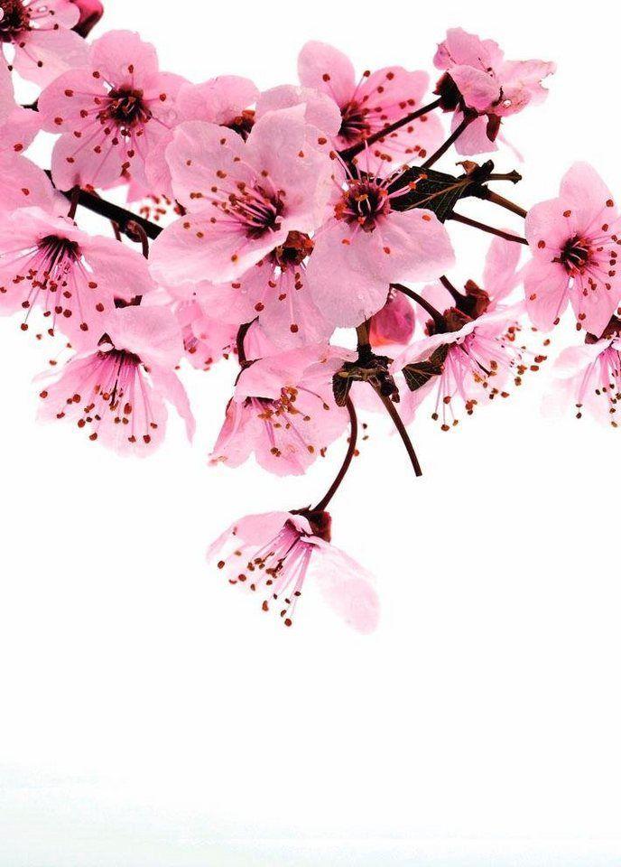 Fototapete Rosa Blute 3d Optik Mehrfarbig Floral Fsca Online Kaufen Rosa Blute Fototapete Und Tapeten