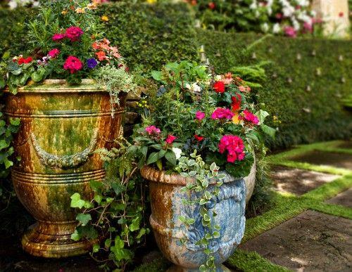 Home-flowers-plants