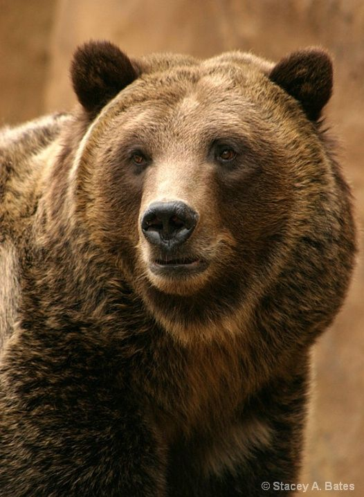 Bear ** The Father of Dotillism. The PopDot Artist Alabama BYRD. (FaceBook) --> http://www.facebook.com/AlabamaBYRD Chirp Chirp & Big BYRD Smiles & Hugz