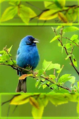 Mi Rincón del Bosque Mágico: Pájaros y flores juliaminerva-miviejor.blogspot.com550 × 823Search by image Pájaros y flores