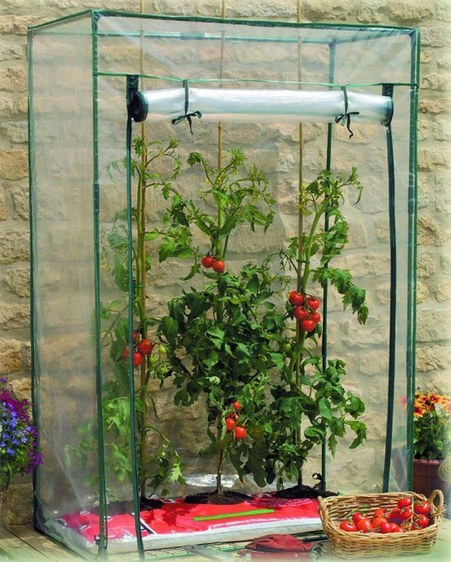 Best ideas about mini greenhouse on pinterest