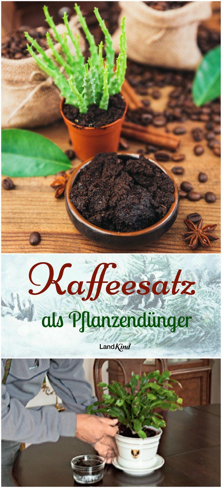 Ein altbewährter Pflanzendünger ist Kaffeesatz, denn er liefert reichlich Kalium, Phosphor und Stickstoff. Abgekühlter Kaffeesatz wird um die Pflanze verteilt und in den Boden eingearbeitet. Besser ist aber, schon vor dem Pflanzen oder Umtopfen die Blumenerde mit Kaffeesatz zu durchmischen. Auch kann ein Teelöffel Kaffeesatz in ca. 1 l Gießwasser gegeben werden. Dann muss sehr darauf geachtet werden, dass keine Pulverreste auf den Blättern liegen bleiben.